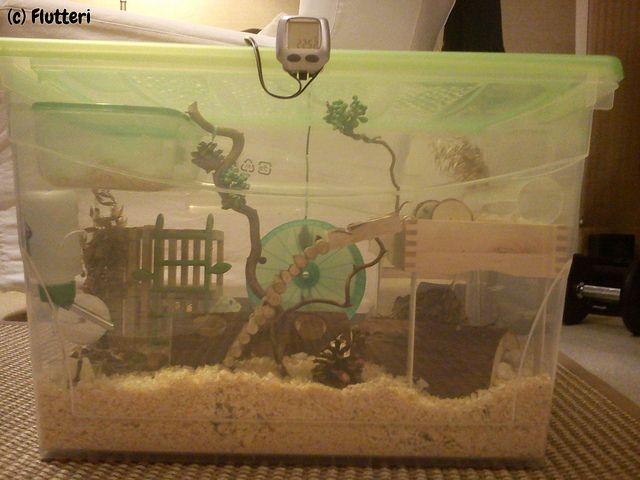 """bin cage made from Kis Omni Box"" with http://www.ikea.com/fi/fi/catalog/products/80136622/ - #mice"
