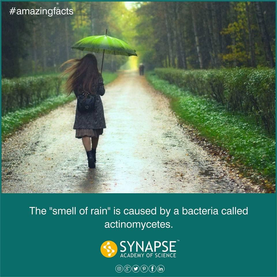 #Amazingfacts Walk through the first rainstorm of the season and it slowly hits you: that fresh, earthy smell.This smell is the result of a bacteria commonly found in the soil. #synapseeducare #academyofscience