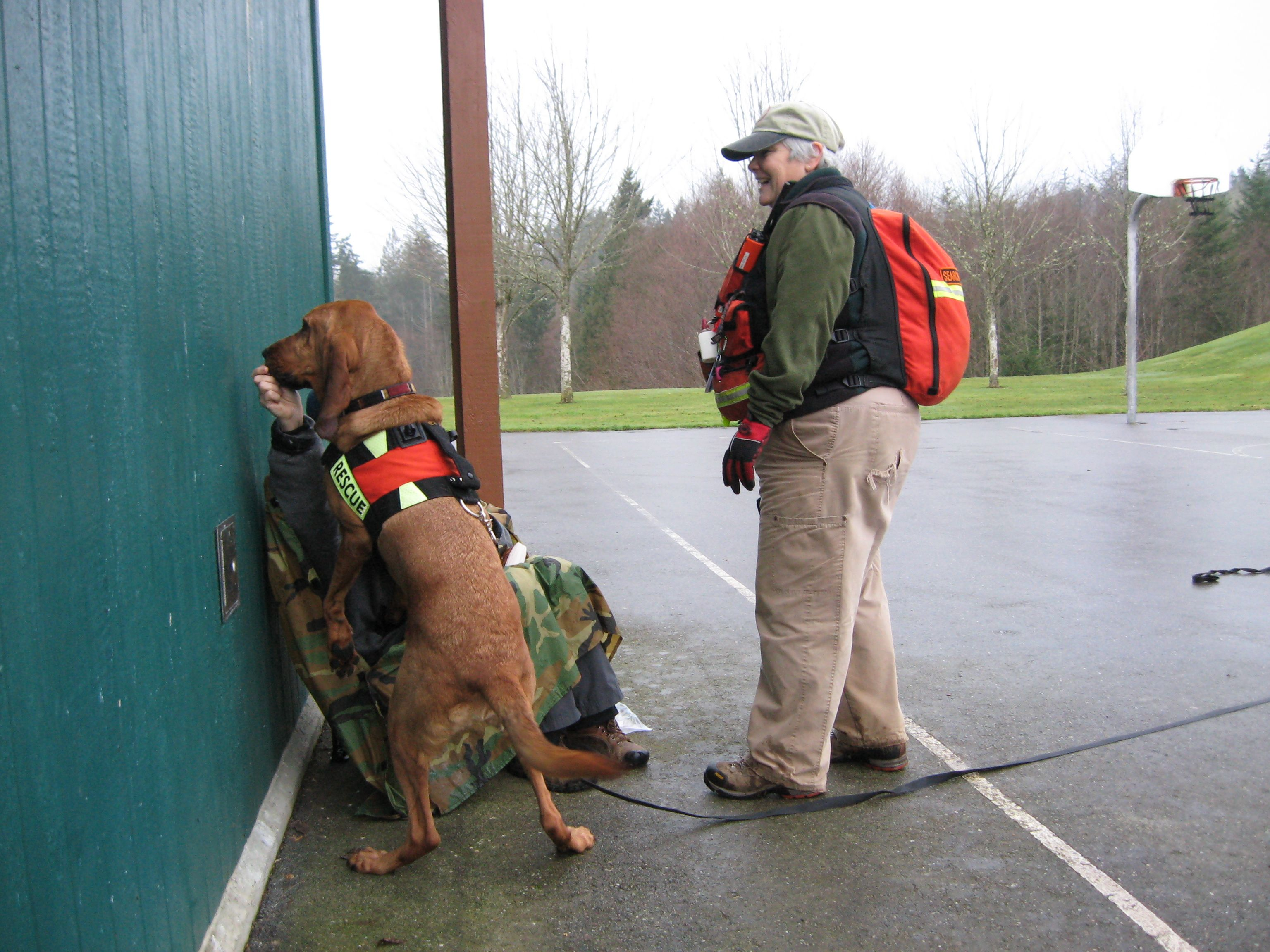 Sar K9 Bonnie Belle Found Her Lost Subject During Training