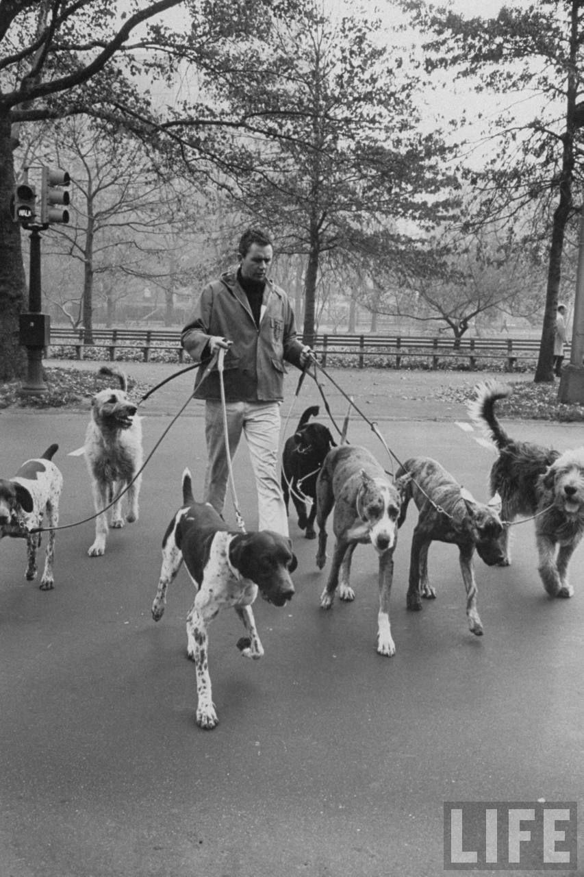 Image result for central park dog canine