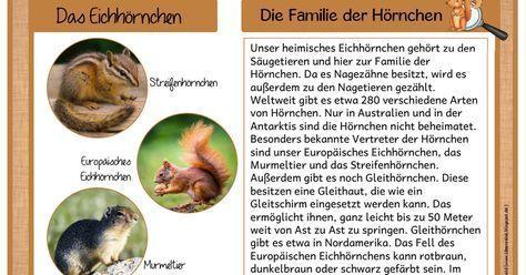 wissenskarteieichhörnchen.pdf | wald grundschule, ideen für das klassenzimmer, grundschule