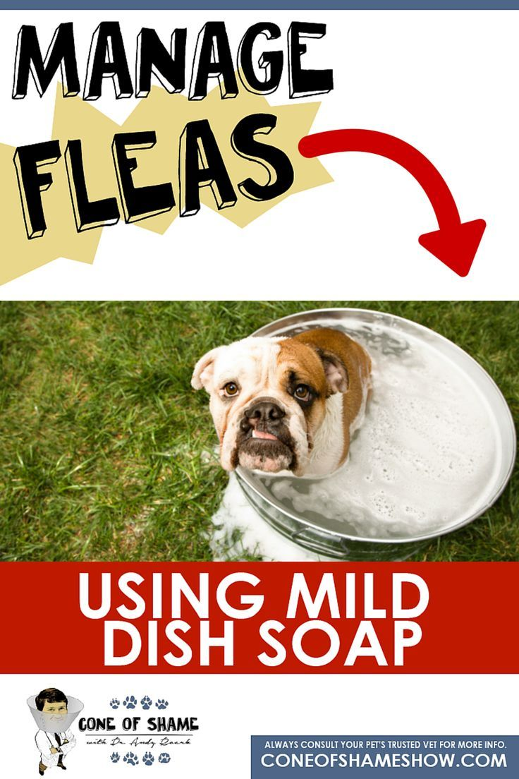 Mild Dish Soap As A Safe Home Remedy For Fleas Pet Trust Flea
