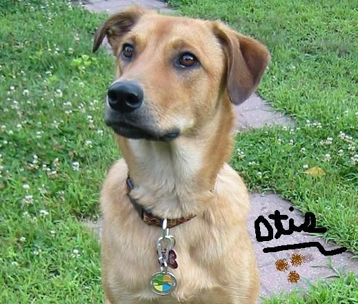 Irish Wolfhound Great Dane Mix Great Wolfhound Great
