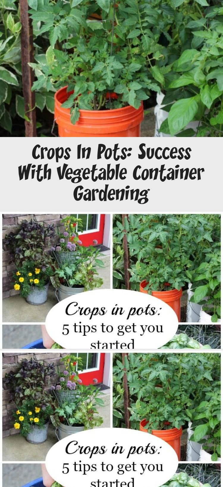 Crops In Pots Success With Vegetable Container Gardening