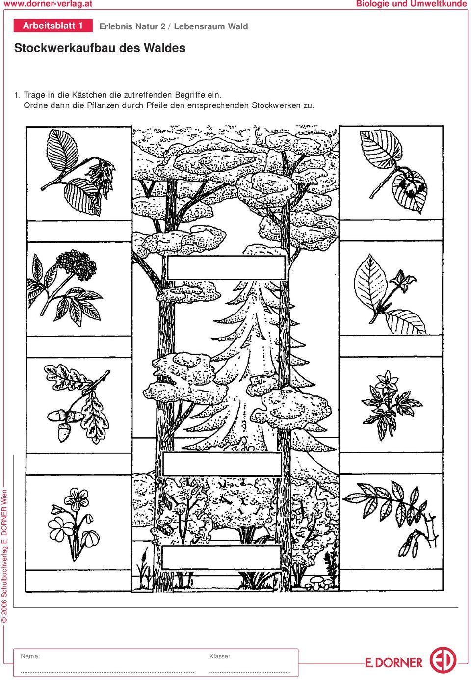 20 Přírodověda   rostlinná říše ideas   říše, učení, životní ...