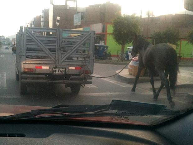 Camioneta placa PF5209 jalando caballo