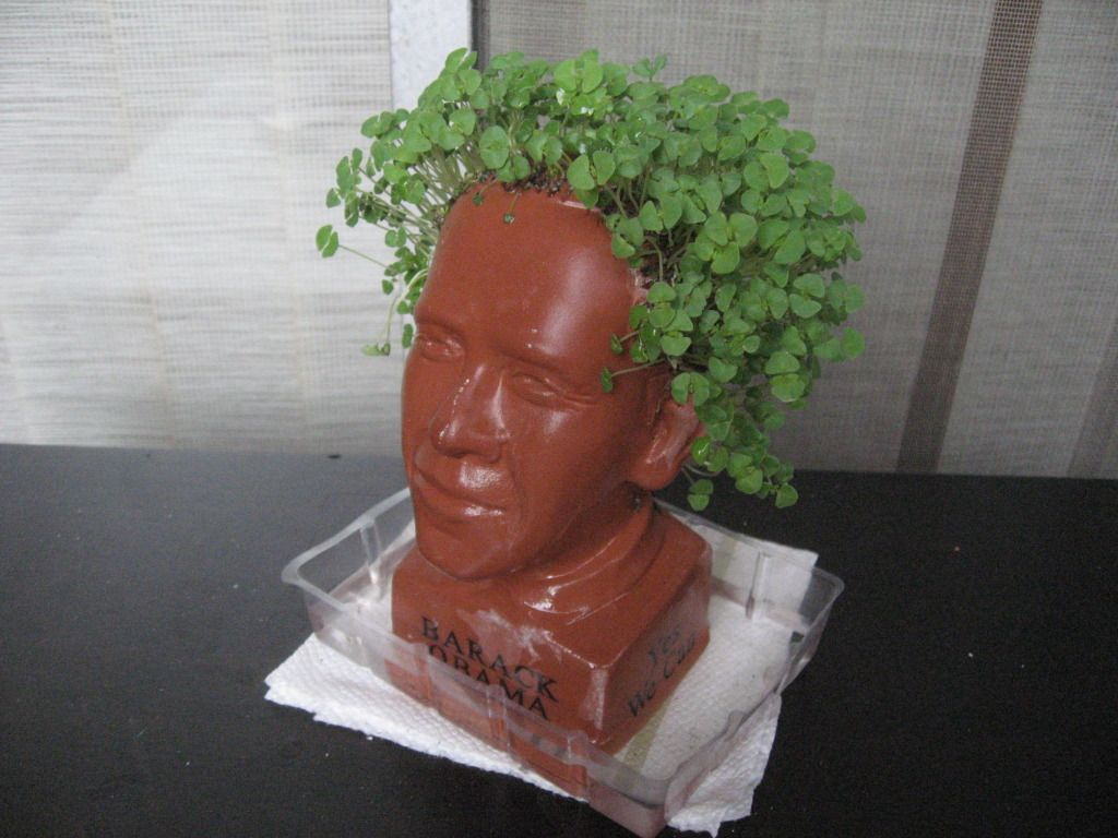 Flower Power Obama Chia Pet Fully Grown Funny Scale 6 Out Of