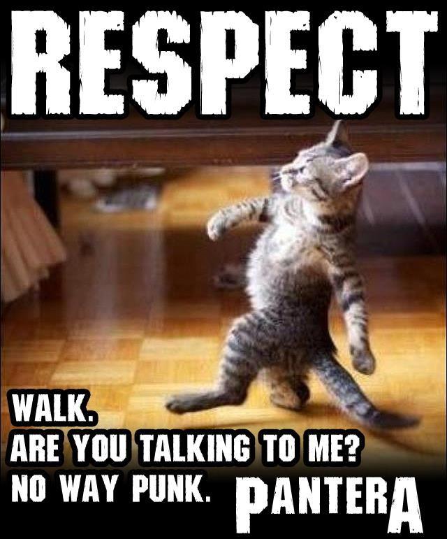 Respect, Cat, Kitten, Pantera, Haters
