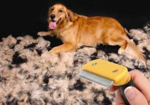 Online Dog World Golden Retriever Golden Retriever Grooming