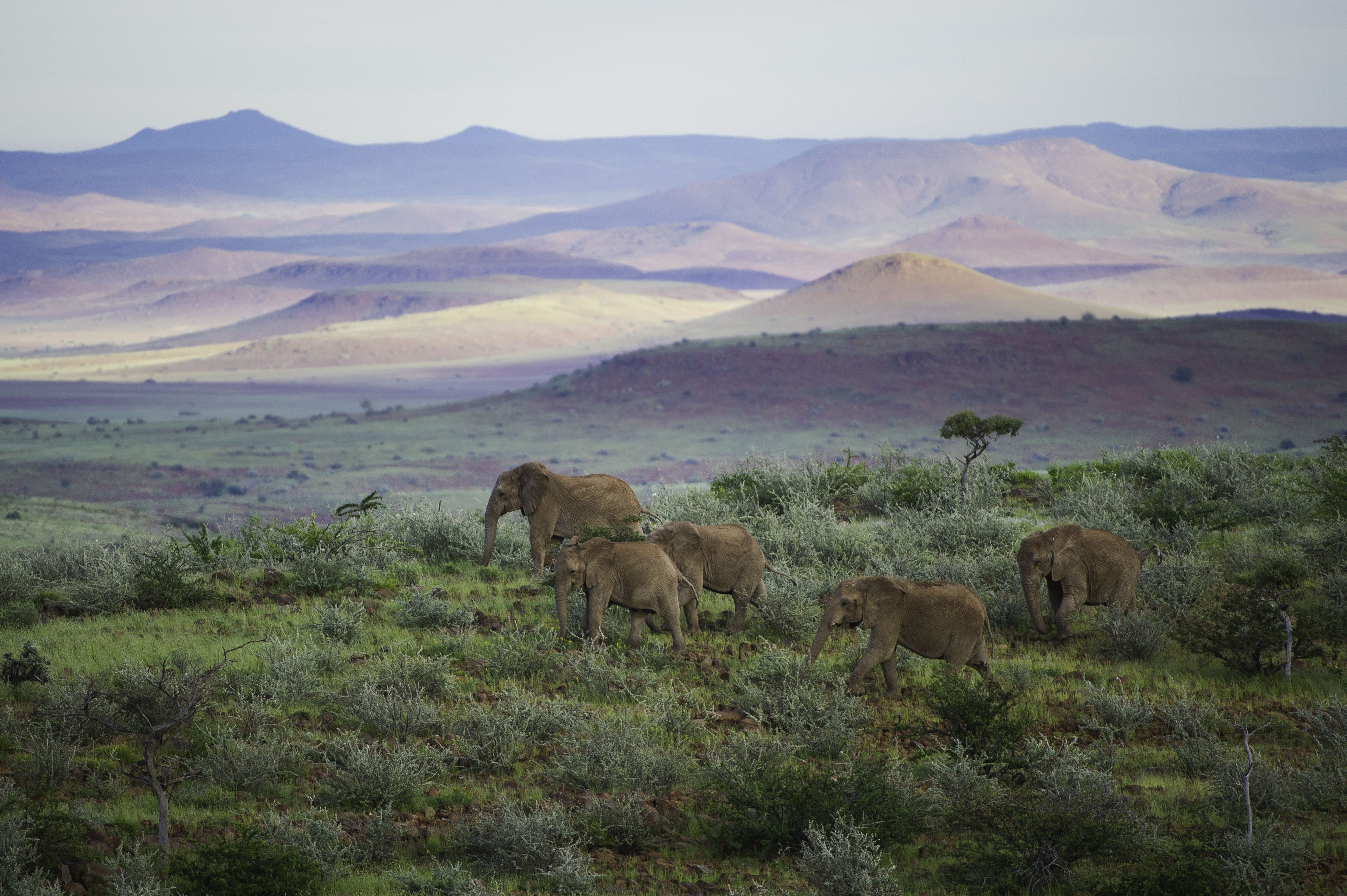 This 14 day tour takes you through some of the most remote areas of the fascinating land of Namibia. Discover the dunes of Sossusvlei take in the amazing marine life just off Swakopmund, the secluded and dramatic coastline of the Skeleton Coast littered with historic remnants of shipwrecks and the rugged and rocky landscape of Palmwag where the last free-roaming black rhino rove.