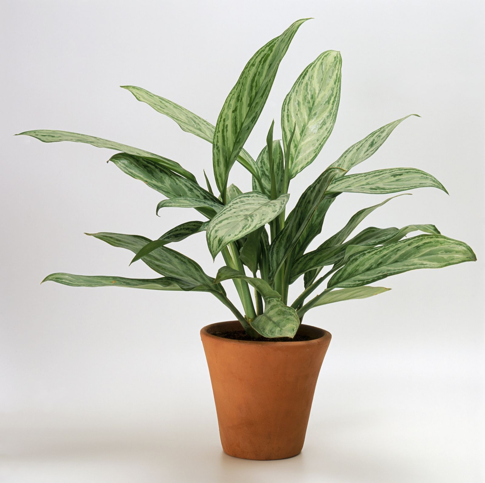 10 best air purifying plants for the home   Bathroom ...