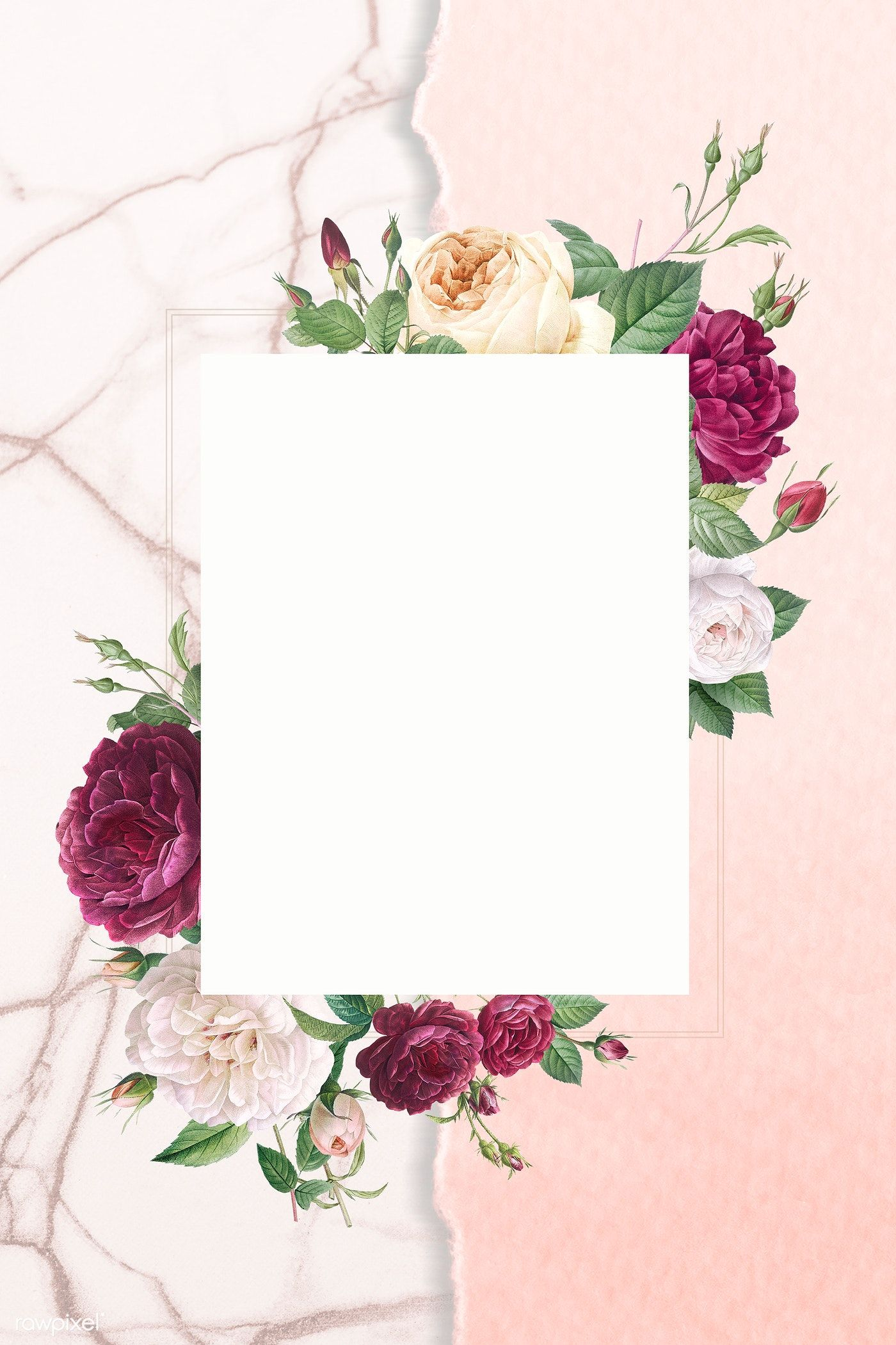 Rose Images Free Vectors Stock Photos Psd