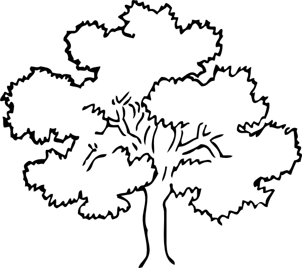 Simple Coloring Pages Oak Tree Clip Art
