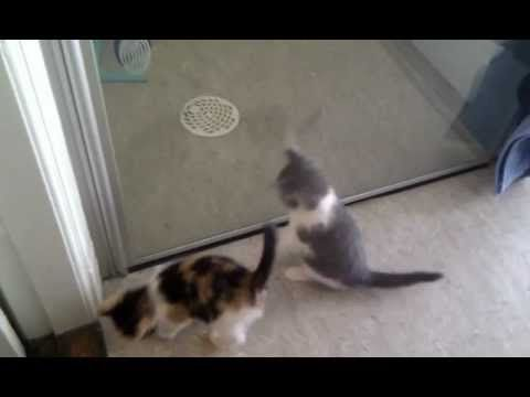 Funny Kittens Discover Their Own Mirror Images - http://www.gigglefinger.com/funny-kittens-discover-their-own-mirror-images/
