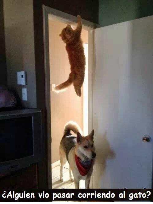 Memes De Gatos Http Lindogatito Com Gatos Ninjas Perros Y Gatos Graciosos Gatos Graciosos