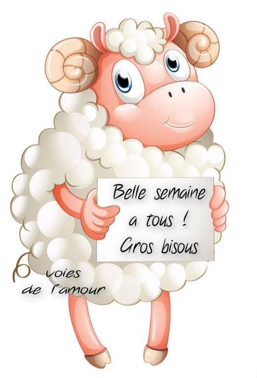 Belle semaine à tous ! Gros bisous #bonnesemaine mouton belier drole | Bon matin, etc... | Bonne ...