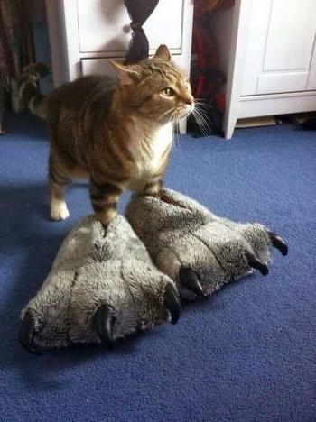 고양이 전용무기