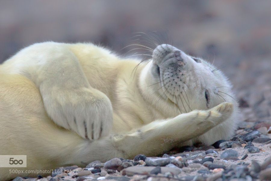 So Tired by MichaelMilfeit. Please Like http://fb.me/go4photos and Follow @go4fotos Thank You. :-)