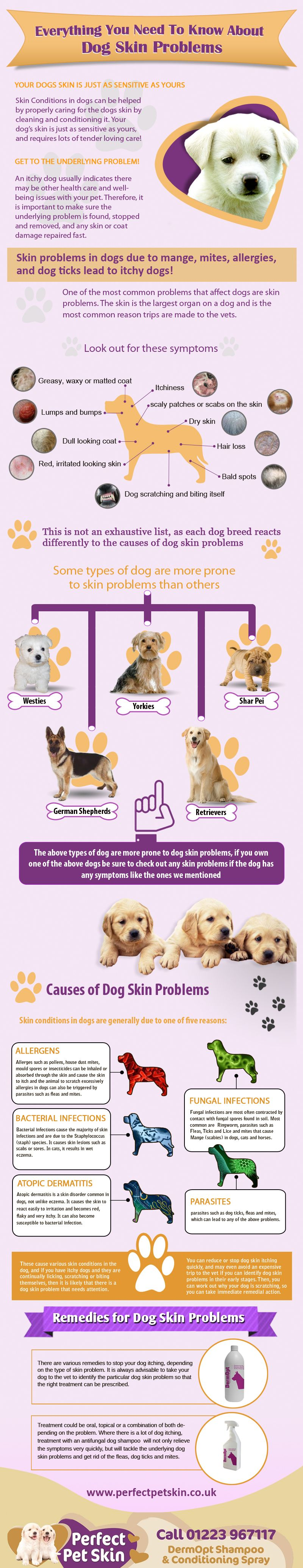 Dog Skin Problems Are Very Common This Infographic Will Help You
