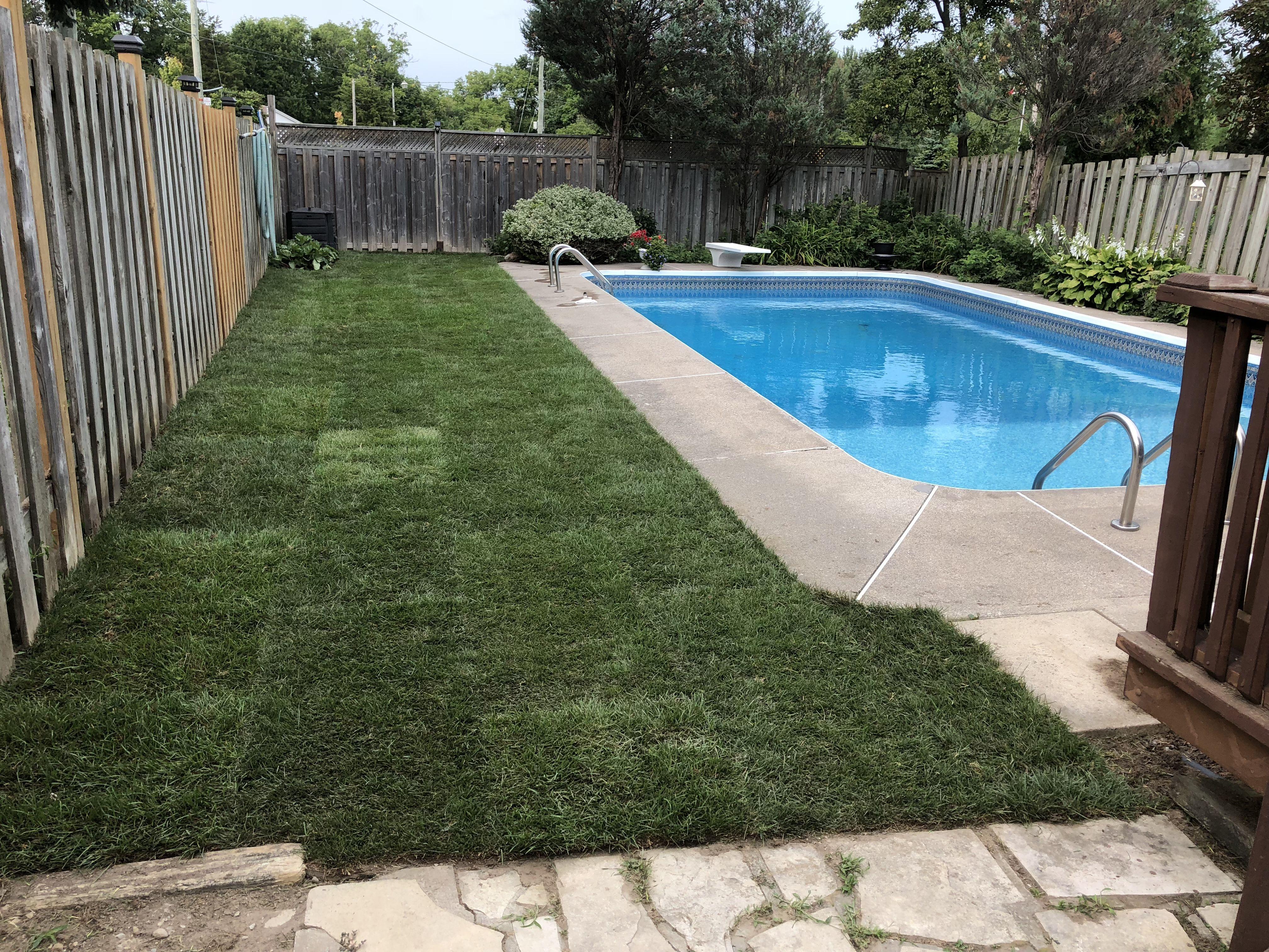 Pool Sod Installation Markham Lawn replacement Sodding My