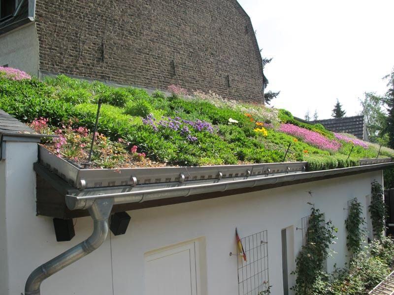 Mediterrane Dachbegrunung Gartenbau Und Landschaftsbau Aus Erftstadt Wir Planen Und Bauen Ihren Garten Dachbegrunung Flachdach Begrunung Terrassendach