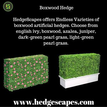 HedgeScapes - Google+