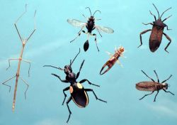 Teaching Science to Elementary Students   Flying Creatures
