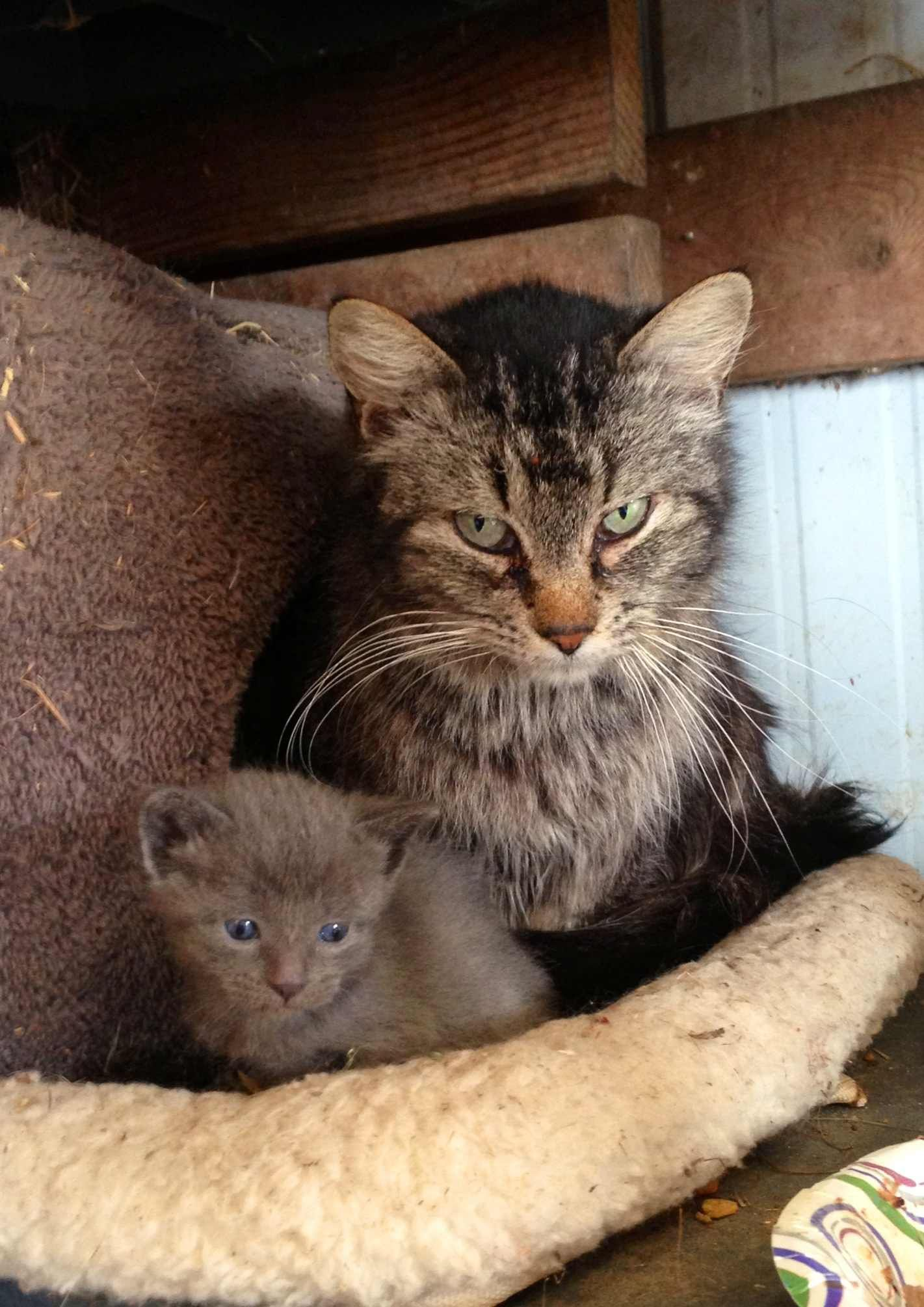 Http I Imgur Com Oucwzbc Jpg Cats Kittens Cutest Cats And Kittens