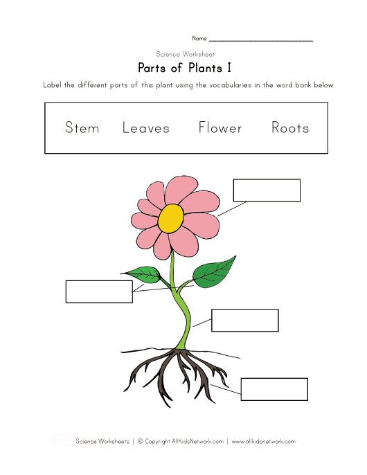 parts of plants worksheet science kids parts of a plant worksheets plants. Black Bedroom Furniture Sets. Home Design Ideas