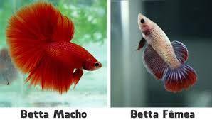 Resultado de imagem para os mais bonitos peixes do mundo