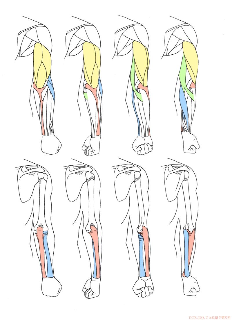 arm_twist_back_R01.png (800×1101) | 参考資料 | Pinterest | Zeichnen