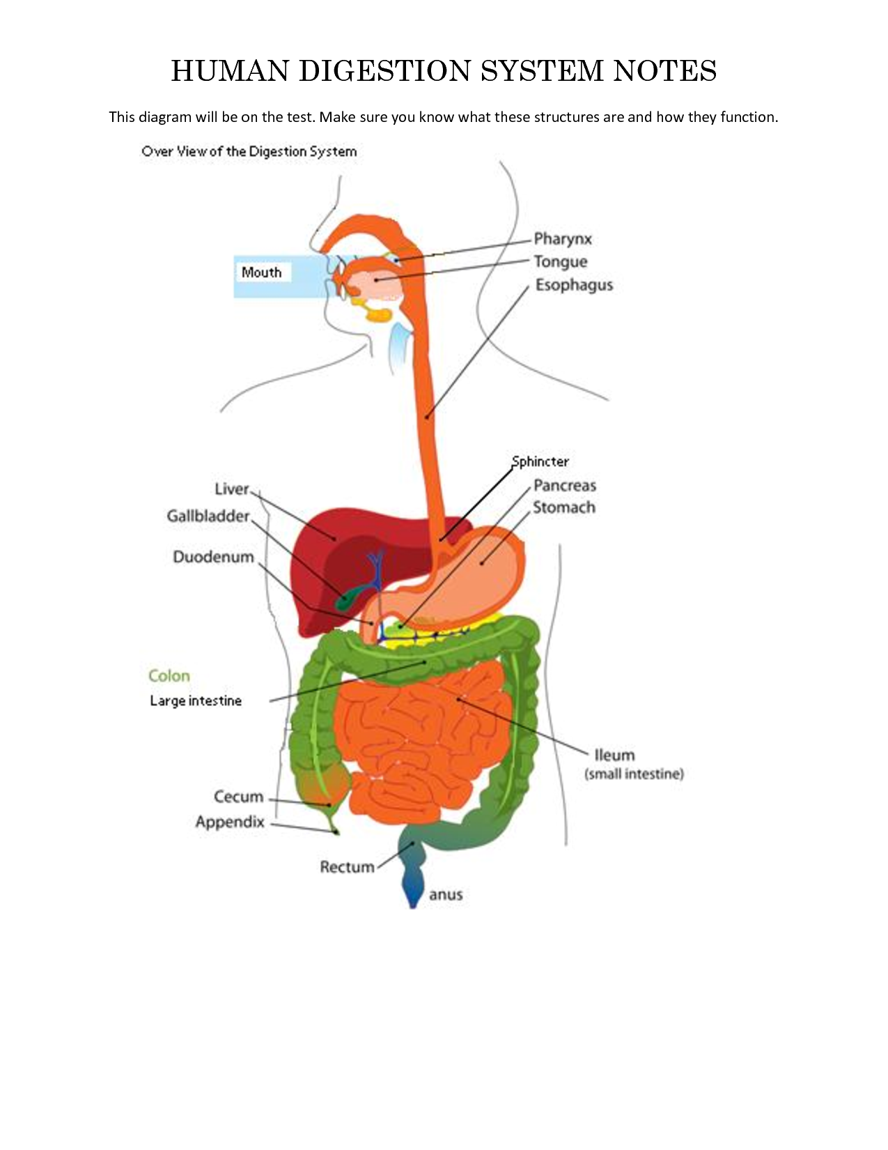 Human Digestive Tract Diagram Diagram For The System Of