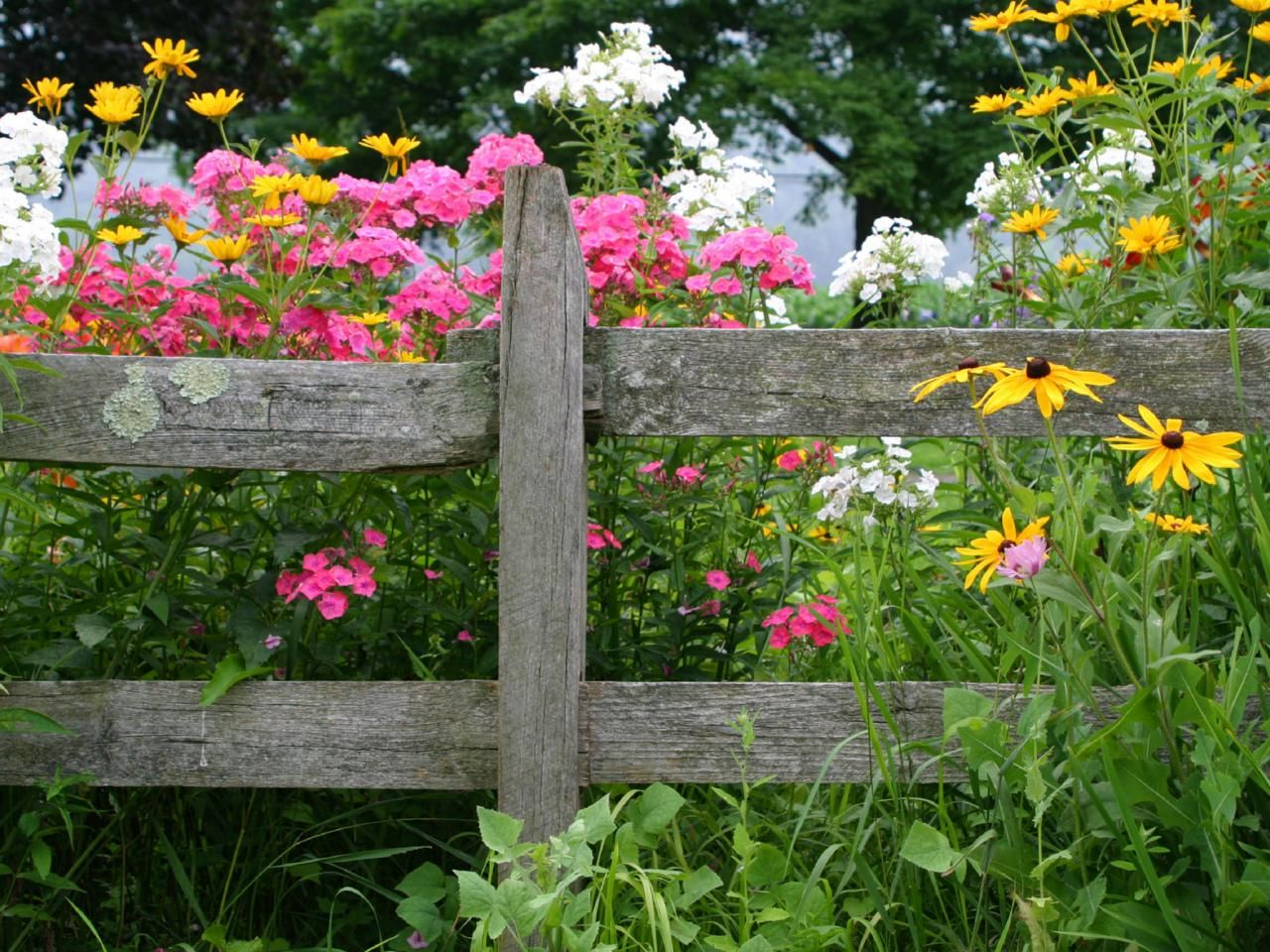 Trying To Decide What To Grow In Your Garden Or Yard? DIY Network Shares  Seven Popular Perennial Flowers To Consider Planting.