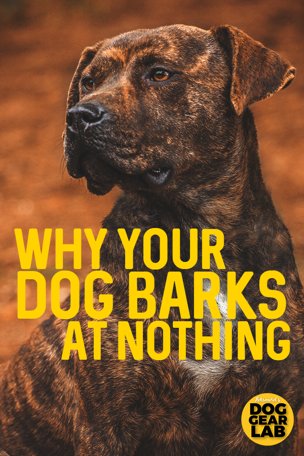 This Is Why Your Dog Barks At Nothing Dog Barking At Nothing Dog Barking Dog Training Obedience