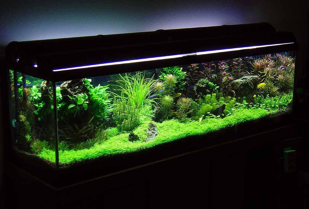 Betta Planted Aquariums Featured Article Betta Tank