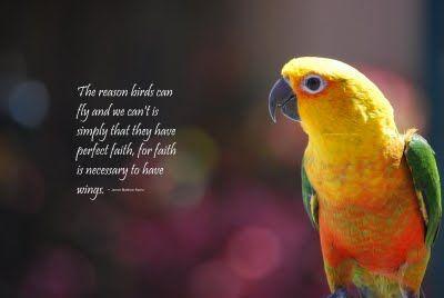 Bird Quotes Bird Quotes Birds Photo Quotes