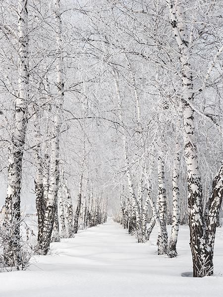 Photo of Kate Winter Scenic Phtography Tree Snow Photo Background