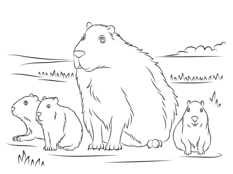 Capybara with Cute Babies Coloring