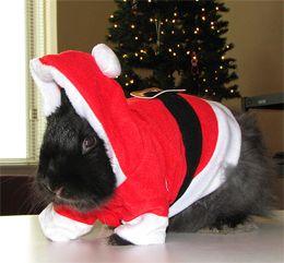 Bunnies In Costume