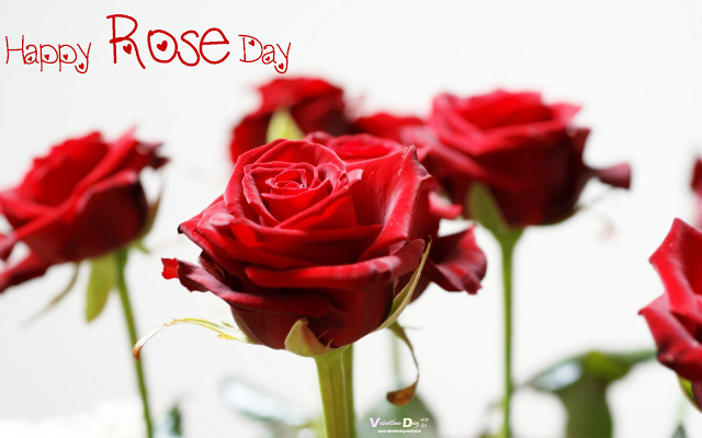 Rose Day 7 Feb Rose Day Quotes Sms Wishes Greetings Messages Msg Shayari Poem Song Happy Rose Day Wallpaper Rose Day Wallpaper Red Roses Wallpaper