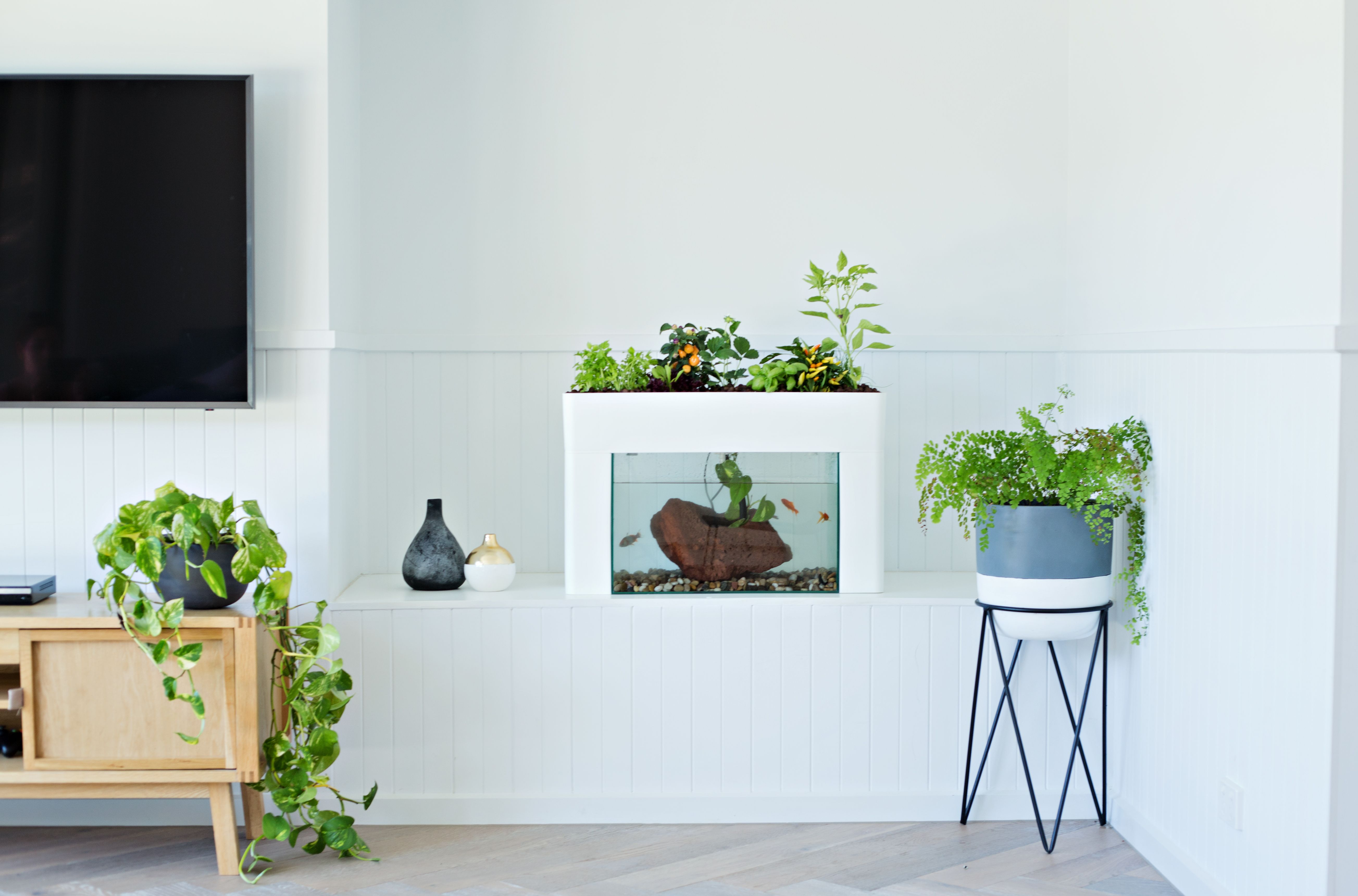 Add some life to your living room The self cleaning Aquasprout will