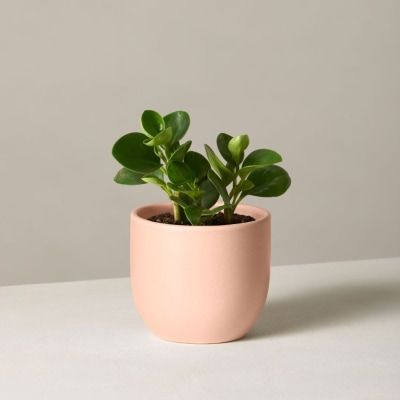 That Desk Plant Actually Has a Pretty Good Benefit -   17 planting Indoor desk ideas