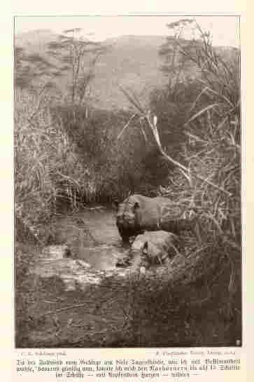 Black rhino in waterhole-Schillings 1907
