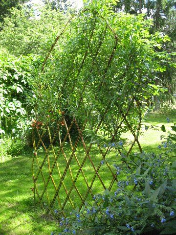 Varjoyrtin Puutarha Belgialainen Elava Aita Outdoor Outdoor Structures Garden