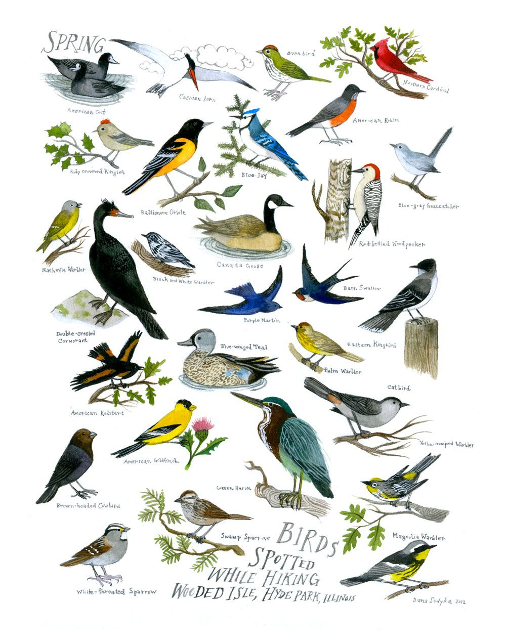 diana sudyka hyde park birds drawings and paintings