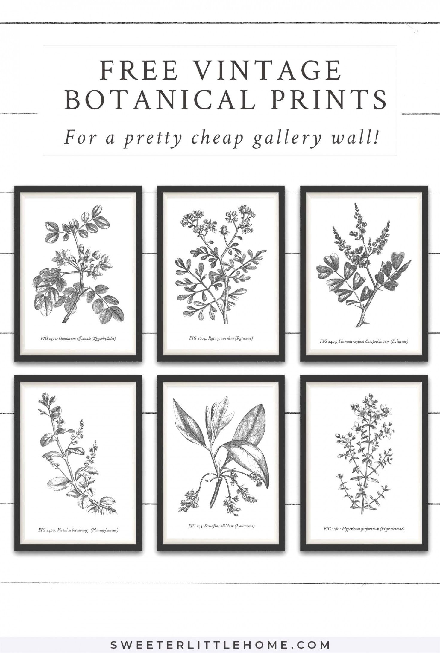 Download This Free Printable Vintage Botanical Wall Art To Create A Beautiful And Cheap Gal Free Printable Wall Art Botanical Wall Art Vintage Botanical Prints