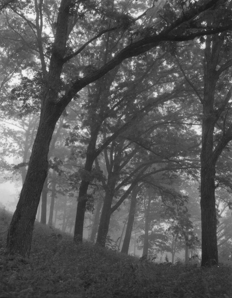 Flickr tree plants tree trunk