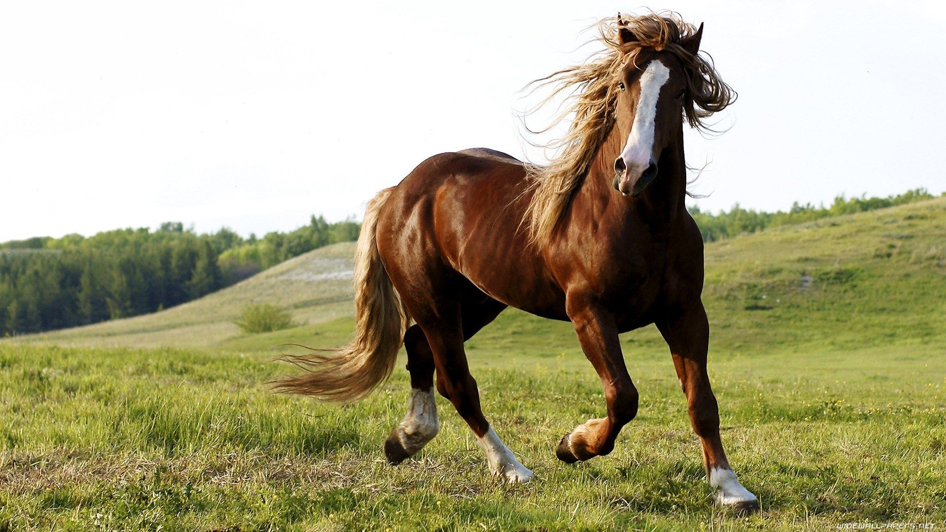 Cool Wallpaper Horse Android Phone - 2e10a92852c4d9c6b64d2a8735988267  You Should Have_475858.jpg
