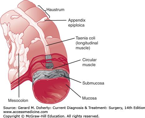 taenia coli | medicine | Pinterest | Movie posters, Poster ... Taenia Coli Histology