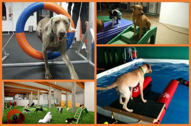 If you are looking to give your dog enough exercise when outdoor exercise isn't an option, consider your local indoor #dog park!